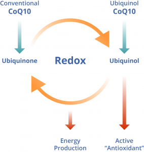 CoQ10 infographic